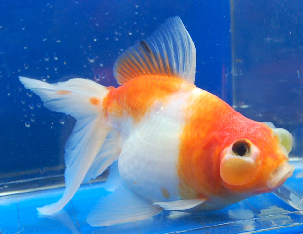 the goldfish A viewer funded public research media organization providing analysis of world events and the changes of our time, through videos and social media news.