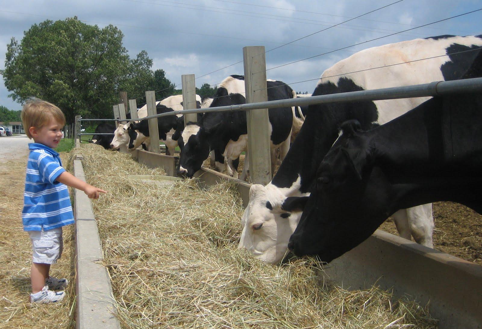 Happy Cow CreameryDairy Cow Farm