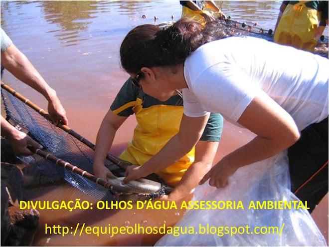 MANEJO DE CURIMBA (Prochilodus lineatus)