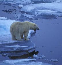 si sciolgono i ghiacci eterni