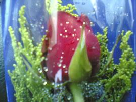 Sekuntum bunga dari hubby d ari lahirku