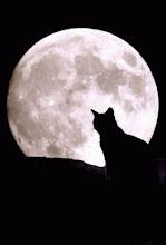 En noche de Luna llena se fue...