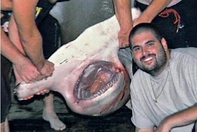 http://3.bp.blogspot.com/_GzXYfK-lDG4/RvqK8KP-nwI/AAAAAAAAD3M/R3iq6Zor_hE/s400/Hammerhead+shark.bmp