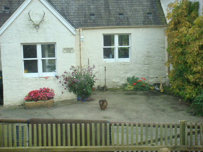 I loved this little house in Scotland, and the dog was hysterical, long & stubby