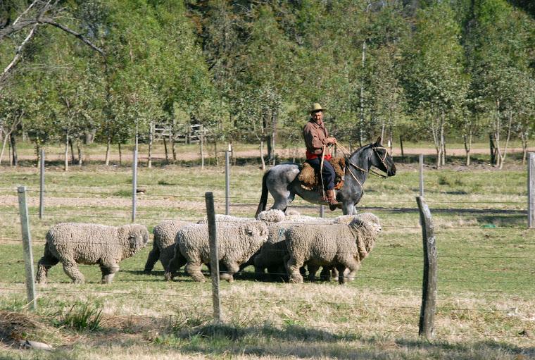 bovinos, otra gran fuente de ingresos