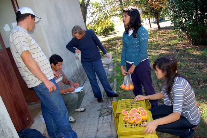 Citrus: mutación... y marcha atrás