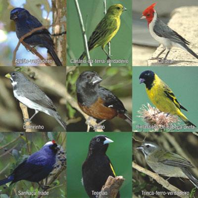 aves da paraiba