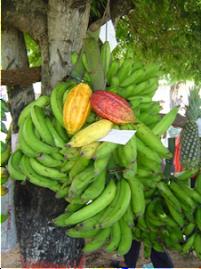 Agricultura Local