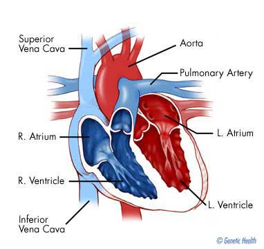 heart attack pain location. dresses Heart attack symptoms