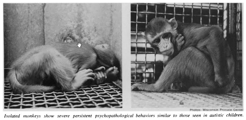harry harlow attachment monkeys ethical Harry f harlow and animal research: reflection on the ethical paradox  on the  one hand, his work on monkey cognition and social development fostered a.