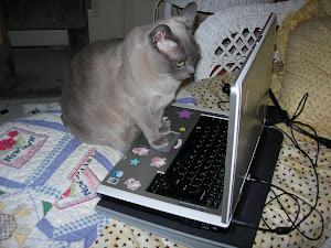 My Blog Editor...