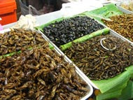 un conference promotes insect eating