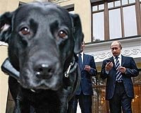 putin's dog gets long-promised gps collar