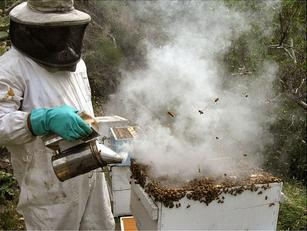 leaked document: epa knowingly approved bee-killing pesticide