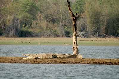 Safari on the Kabini River