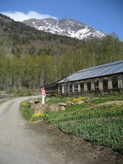 Forget Me Not Nursery in Indian, Alaska
