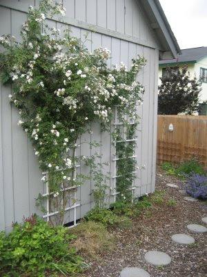 Polska Polar Roses in Alaska