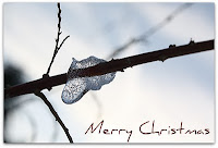 Pictures taken in PHPR's garden during the winter of a curiously translucent ice formation on a red twig - used as PHPR's online Xmas card