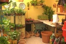 La Trastienda, la tienda de las plantas en Ubrique