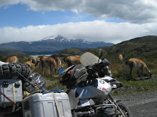 Guanacos and my bike..