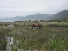 Bloody Elk!