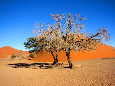 trees wallpaper. Namibia Trees Wallpaper