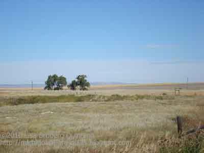 Grass Novelty Fabric   Novelty Landscape Quilt Fabric