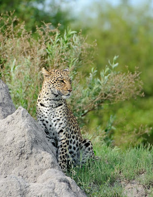 botswana, c4 images and safaris, greg du toit, photo tour, safari, shem compion