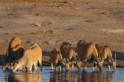 shem compion, c4 images and safaris sesfontein, etosha