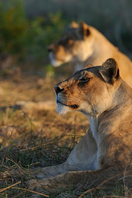c4images and safaris, mashatu, photo workshops