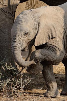 c4images and safaris, mashatu, photo workshops