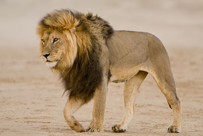 c4 images and safaris, nature photographer, photo workshops
