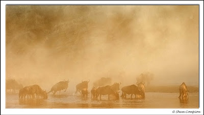 masai mara, safari, shem compion