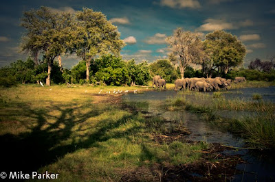 okavango delta photo safari, chiefs island photo workshop, c4 images and safaris,
