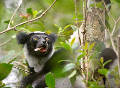 madagascar, c4 images and safaris, shem compion,