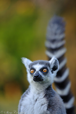 c4 images and safaris, madagascar, shem compion