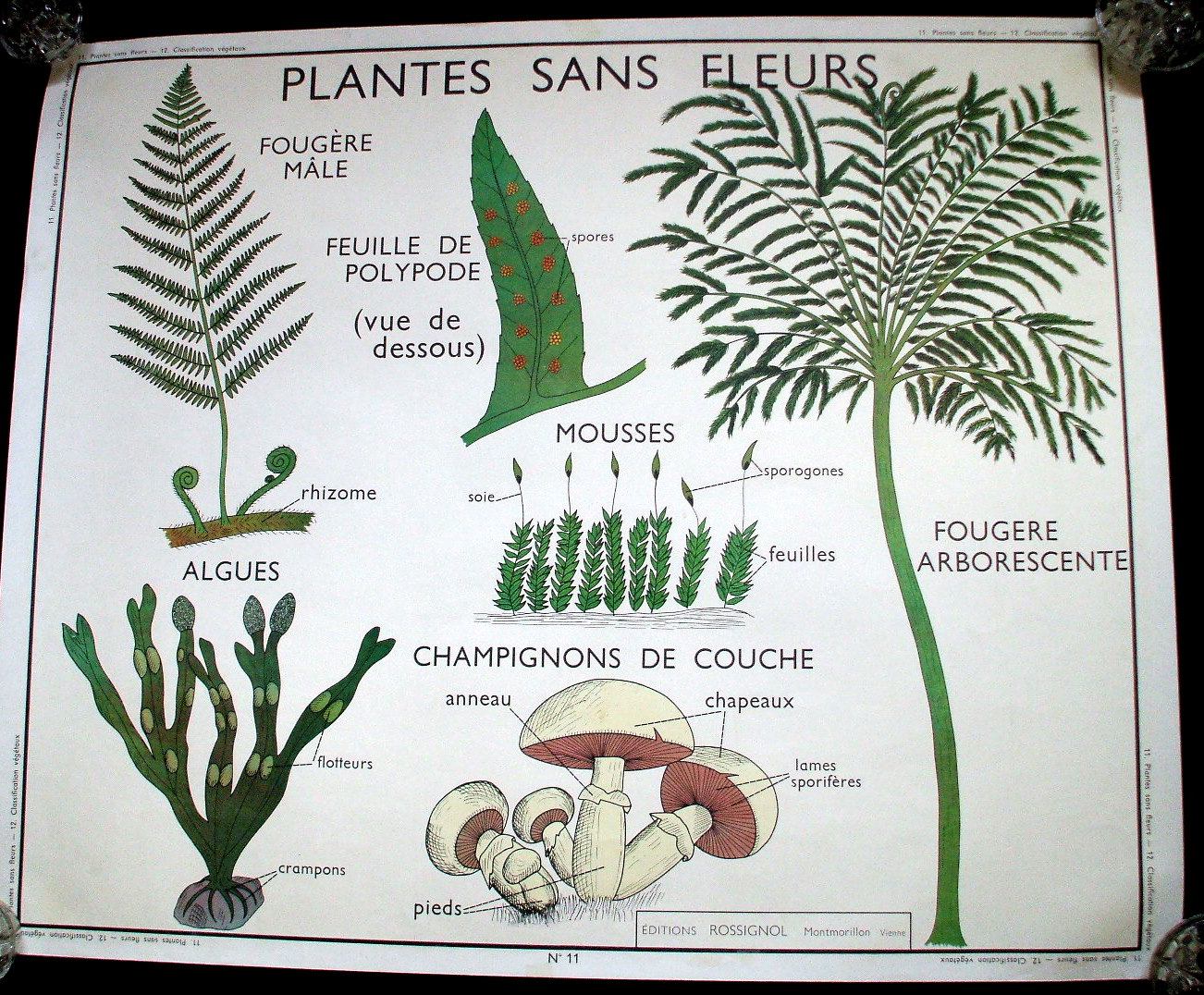 [French+vintage+school+poster+botanical+plant+french+wall+le+trip.JPG]