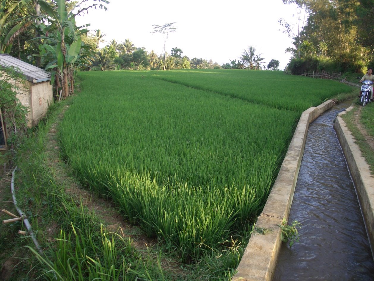 Wedge-shaped rice paddy, Cilitung