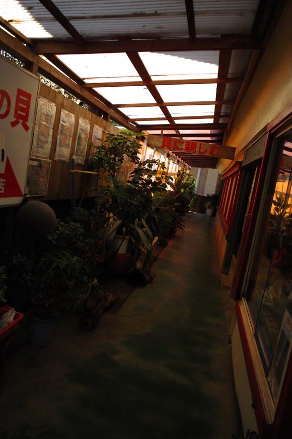 [江ノ島写真827   SDIM5705.jpg]