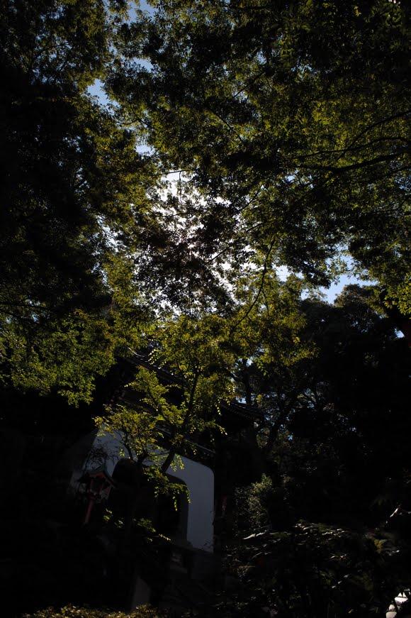 [江ノ島写真827   SDIM5760.jpg]