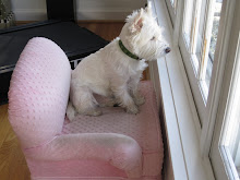 Winston in his pink chair