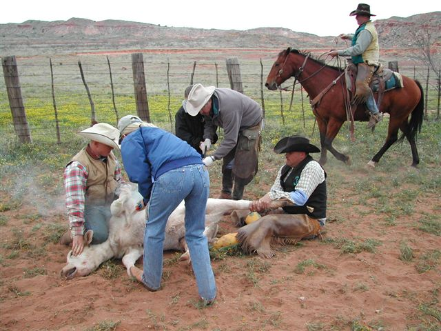 Cattle Branding: Tradition Without a Heart – Advocacy for ...