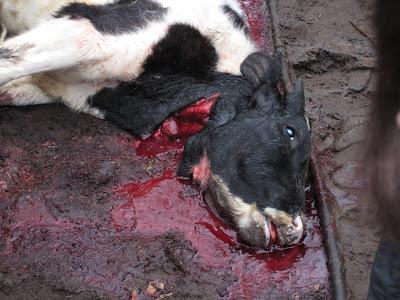 Ritual Slaughter IMG_0199