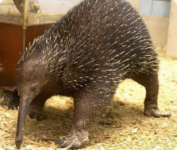 World%2527s+Weird+Animals+Photos+%25284%2529 Worlds Weird Animals Photos as seen on CoolWeirdo.com