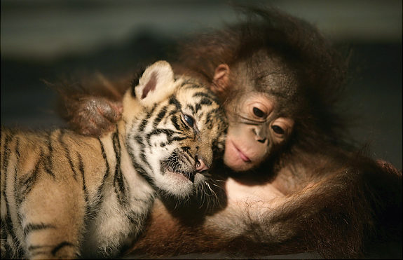 Cute Animals Friends Seen On www.coolpicturegallery.us