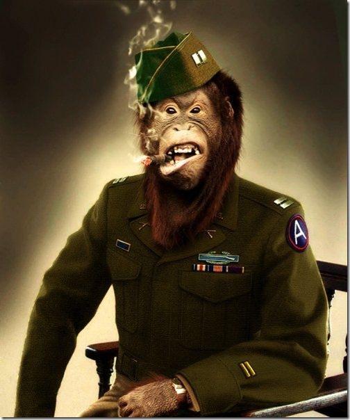 Monkey Look Like People Seen On www.coolpicturegallery.us