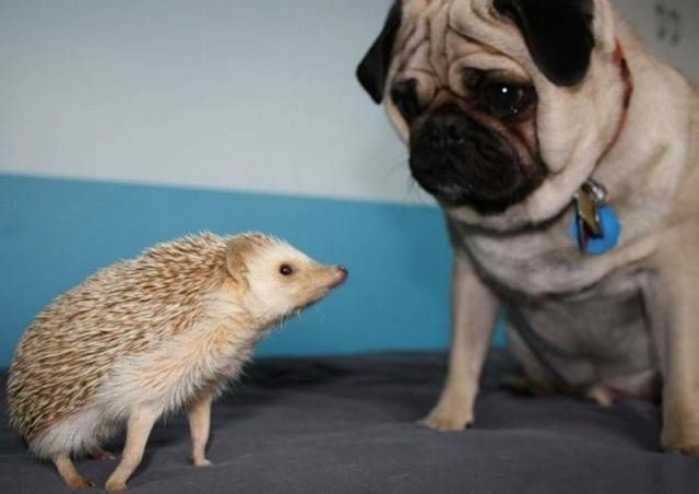 Daily Updated Funny Animals Picdump Seen On www.coolpicturegallery.us