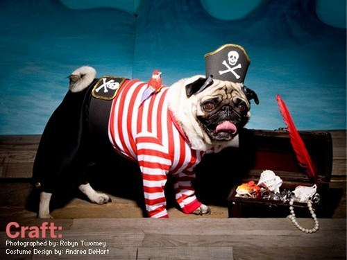 Most Funny Pugs Pirates Pictures Seen On www.coolpicturegallery.us