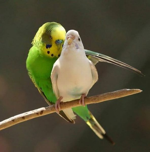 Birds, Cat and Dog Pictures, Cool, Cool Pictures Seen On www.coolpicturegallery.us