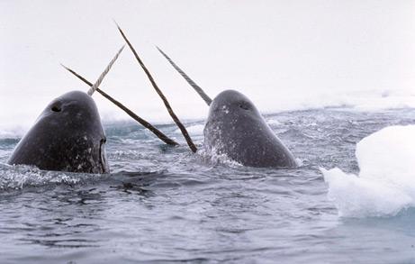 gambar hewan - foto ikan paus